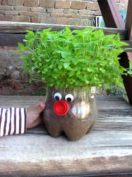 hair-plant